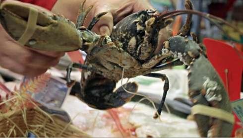http://img710.imageshack.us/img710/9181/lobster.jpg